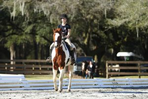 Field trip! We took our dressage studies to Charleston for a change of scenery.