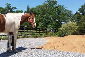 JJ approves of the recent grading work that was done in preparation for a new lesson horse barn.