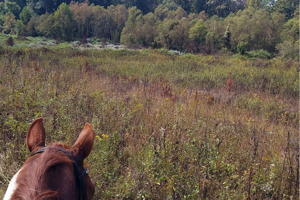 Dawson Forest trail riding