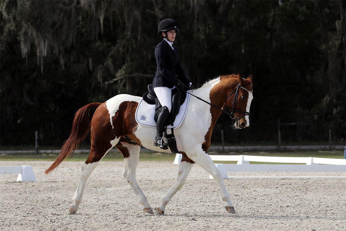 Novice eventing dressage at Rocking Horse Farm in Ocala, Florida