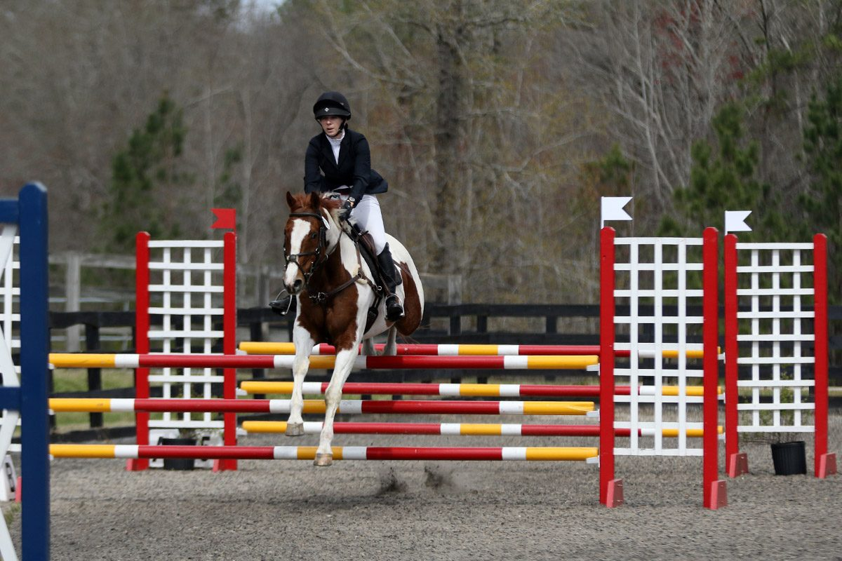 Training eventing stadium jumping at Poplar Place Farm